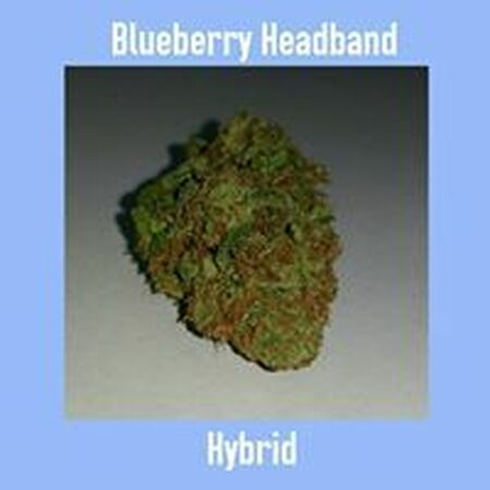 Blueberry Headband Hybrid